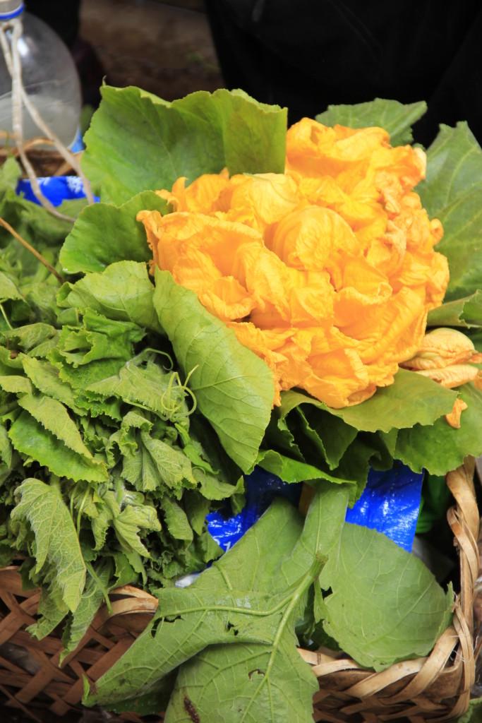 flordeabobora (2)