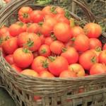 tomatinhosorg2 (2)